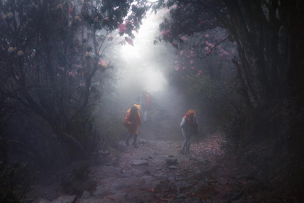 Лангтанг — территория мистических пейзажей Путешествия,фото