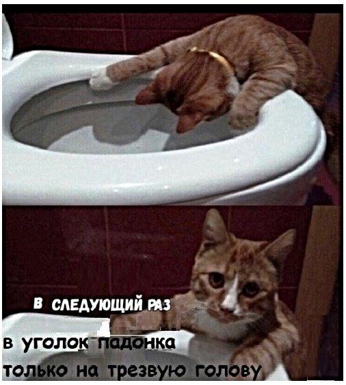 Картинки с котами и про котов Юмор