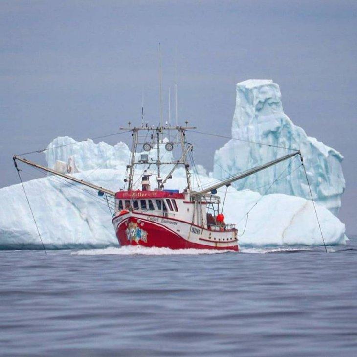 Айсберги идут мимо канадского острова Ньюфаундленд Интересное