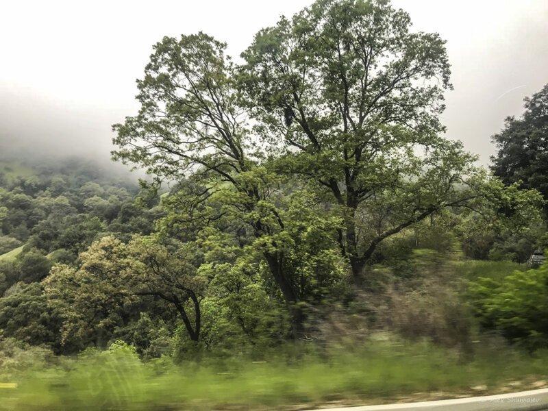 Секвойя в тумане путешествия,Путешествие и отдых