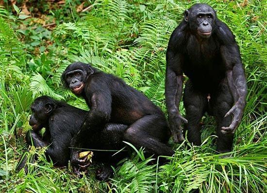 Гиперопека по-обезьяньи: все не как у людей зверушки,живность,питомцы,Животные