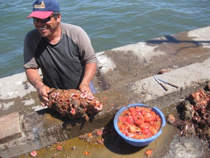 На рыбных рынках Чили можно приобрести деликатес — живые камни зверушки,живность,питомцы,Животные
