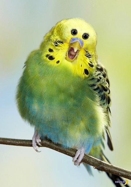 Стоит животным и птицам перенести глаза… Интересное