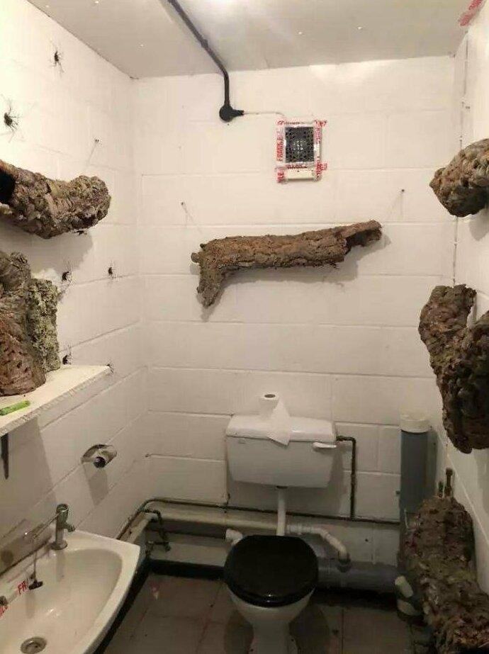 По стенам этого туалета ползают гигантские пауки и это — ад для арахнофобов Интересное