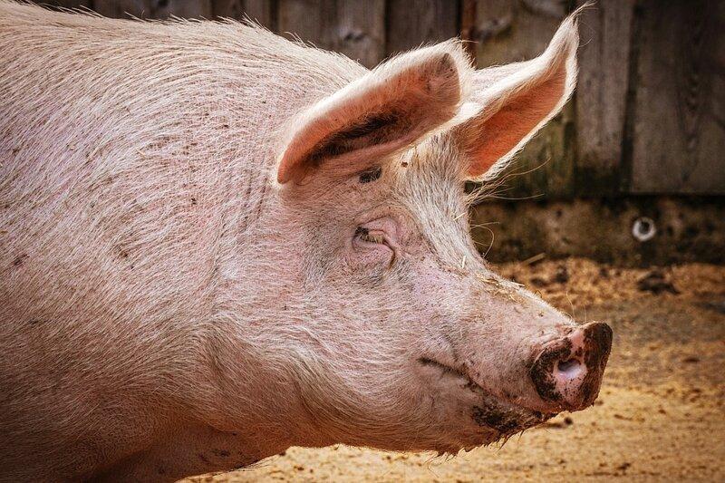 Ответ вегетарианцам: сколько скота в мире, или почему наша еда съест вашу еду Интересное