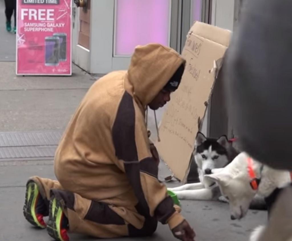 Социальный эксперимент: двух собак хаски оставили на улице с просьбой помочь. Откликнулся только один мужчина Интересное