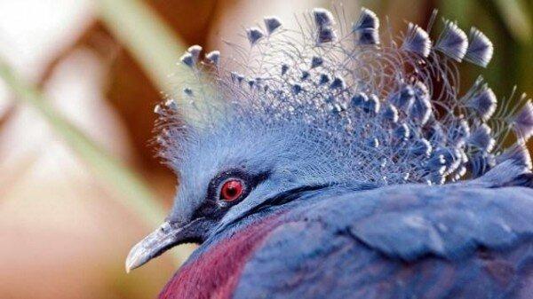 10 малоизвестных и невероятно крупных животных   Интересное