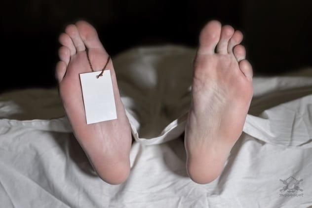 Ответы на странные вопросы о жизни и смерти Интересное
