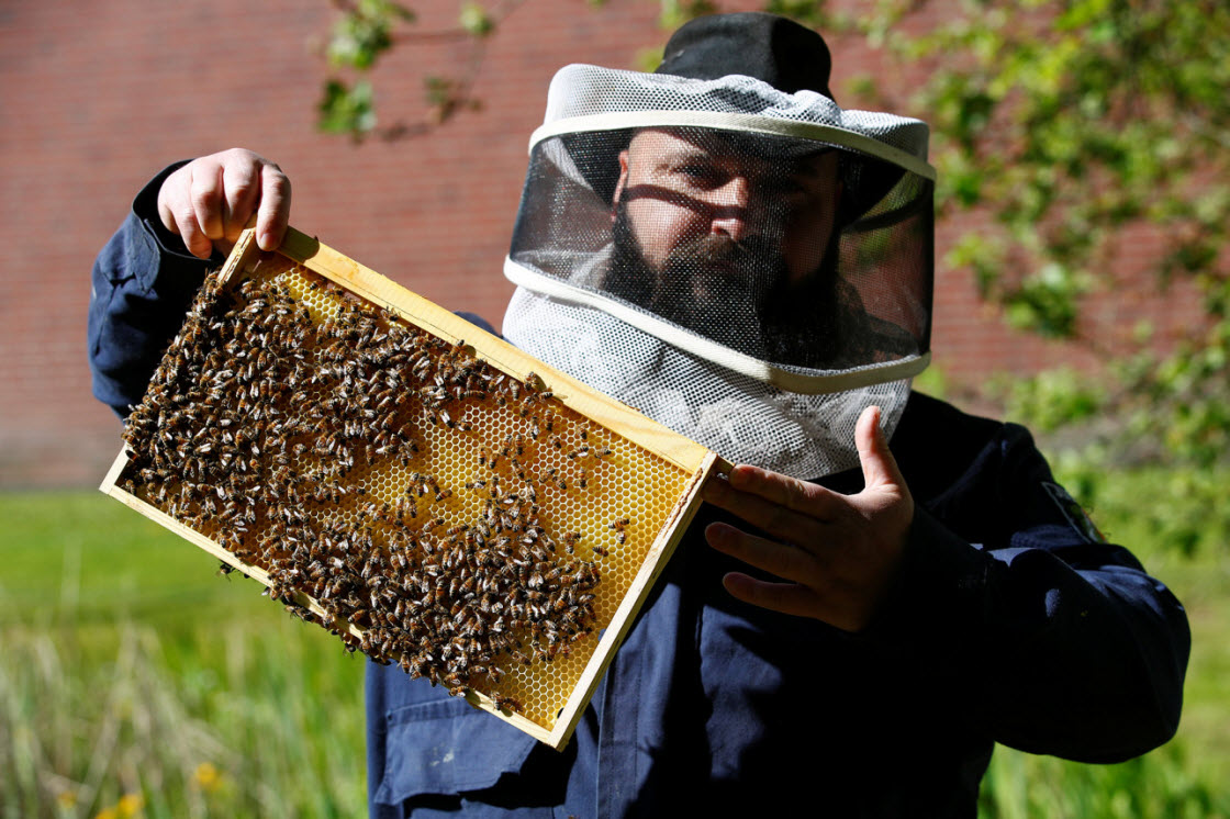 Заключенные помогают спасать пчел в Германии интересное,мед,тюрьма,Германия,пчелы