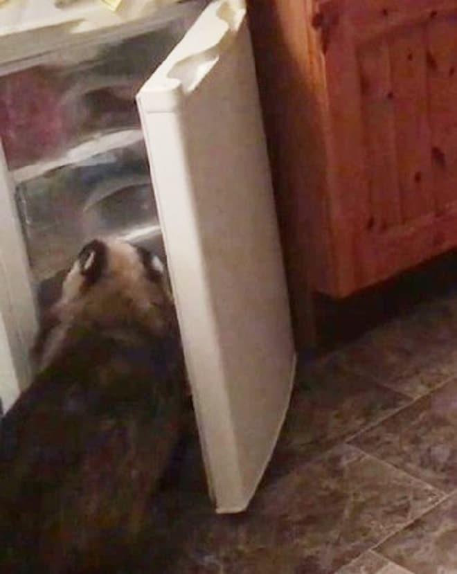 В доме раздавались странные звуки: какой-то зверь грыз продукты прямо из морозилки не всё так грустно