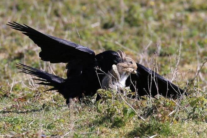 Увидев в лапах хищника маленького зайчонка, фотограф понял, как можно его спасти не всё так грустно