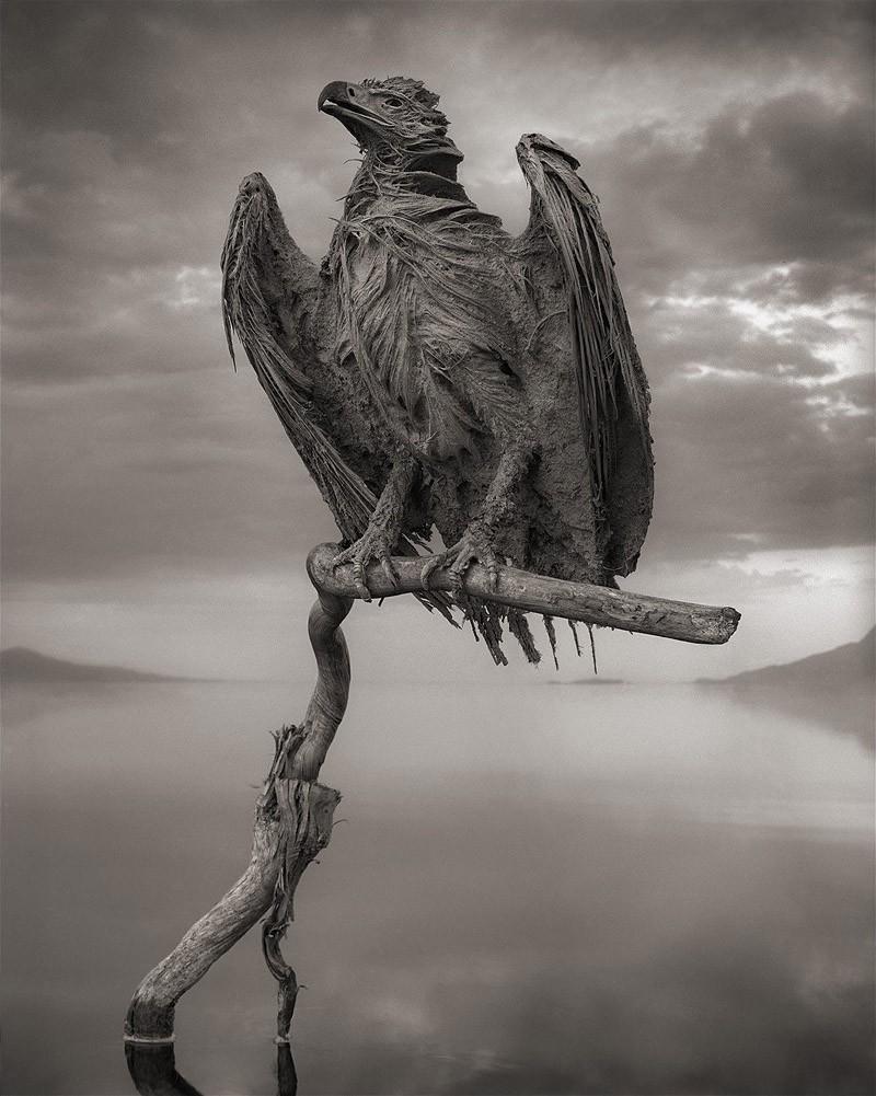 7 фото смертельного озера Натрон, которое превращает птиц в статуи мир,туризм,экология