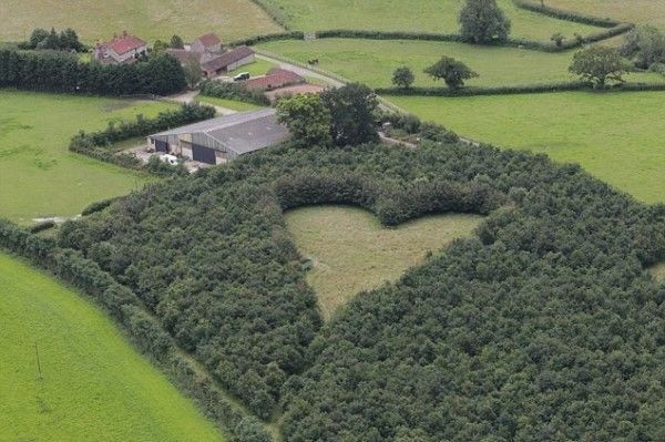 Когда его жена умерла, он посадил 6000 дубов. Смысл этого стал ясен лишь через 20 лет…