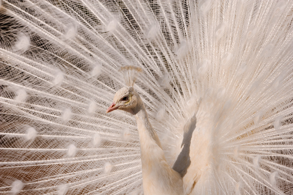 18 фото, доказывающих, что и у природы есть вкус к прекрасному и чувство юмора природа